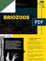 Brio Zoos