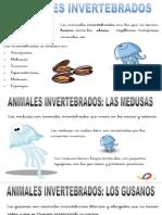 invertebrados ppt