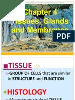 4-Tissues