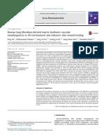 Human Lung Fibroblast-Derived Matrix Facilitates Vascular Morphogenesis in 3D Environment and Enhances Skin Wound Healing