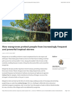 How Mangroves Protect People From Increasingly Frequent and Powerful Tropical Storms