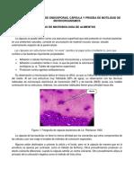 3. Tinción de Endosporas, Cápsula y Prueba de Motilidad de Microorganismos
