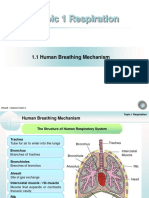 Chapter 1 - Human Breathing Mechanism