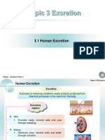 chapter 3 - Human Excretion.ppt
