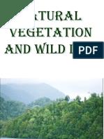 naturalvegetationandwildlife9th-110127233409-phpapp01
