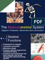 Presentation 14 Skeletal System