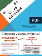 etapas evolutivas y sus conductas
