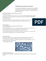 Clasificación de los seres vivos (00000002).docx