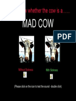 MAD Cow[1]