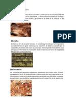 ENFERMEDADES DE LA MADERA.docx