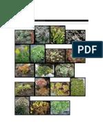 Catalogo Plantas Cactus y Suculentas Mili 2008