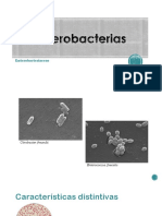 Enterobactereas