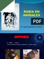 Rabia en Animales