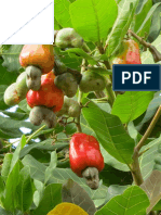 Major diseases of cashew (Anacardium Occidentale L.) Caused by fungi and their control in Odisha, India | IJB
