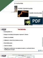 Diapositivas Peces