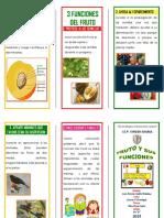 fruto y sus funcioness.docx