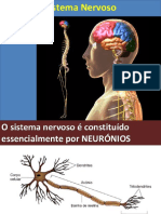 Anatomia - Aula - Sistema Nervoso