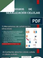 SEÑALIZACION C. AVANCE 03.pptx