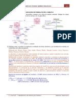 Guía 7-Metabolismo H de C Resuelta