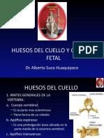 3 Huesos Del Cuello1