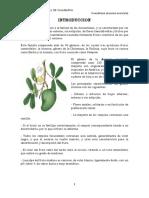 Trabajo de Arboricultura- Guanabana