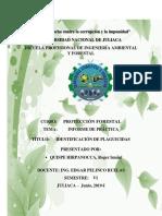 Informe de Protección Forestal
