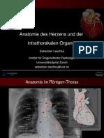 Anatomie Des Herzens - Radiologie
