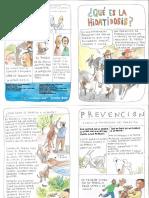 folleto de hidatidosis