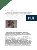 Embrio - 3 Semana de desenvolvimento - PARTE 1 1.docx