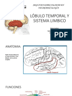 Lobulo Temporal