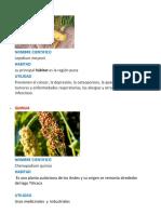 PLANTAS NATIVAS Y SU DESCRIPCION.docx
