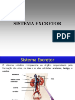 Aula Sistema Excretor