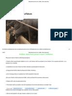 Buffalo Dairy Farm Project Report 4 Buffaloes, Business Plan,Subsidy