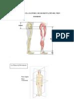 seminario 1 extremidad inferior.pdf