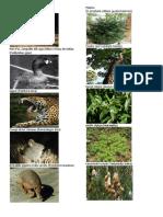 10 Animales y Plantas en Peligro de Extincion Guatemala