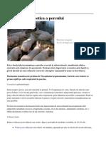 Pneumonia Enzootica a Porcului 42