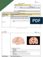 13. Guía Sistema Nervioso de Integración MFI (1)