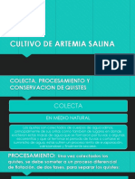 Cultivo de Artemia Salina