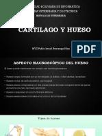 Cartilago y Hueso