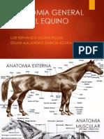 Anatomia General Del Equino