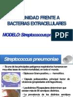 inmunologia neumococo