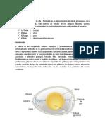ESTRUCTURA DE HUEVO.docx
