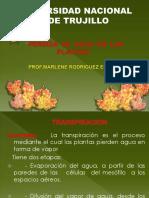 CLASE-4-.TRANSPIRACION-modif.