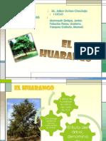 103537658-El-Huarango.pptx