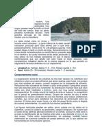 migracion ballena jorobada