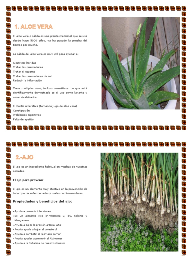plantas medicinales para controlar el apetito