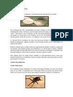 Picadura de Arañas