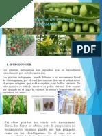Mejoramiento de Plantas Autógamas