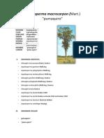 Aspidosperma (Forestal) (1)