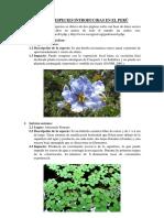 lista de especies introducidas.docx